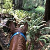 Redwood Ride Orick, CA August 2018